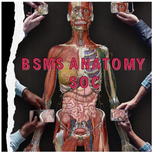 Anatomy Society